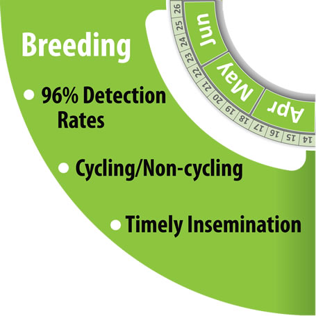 Monitoring Herd Breeding Period with HerdInsights