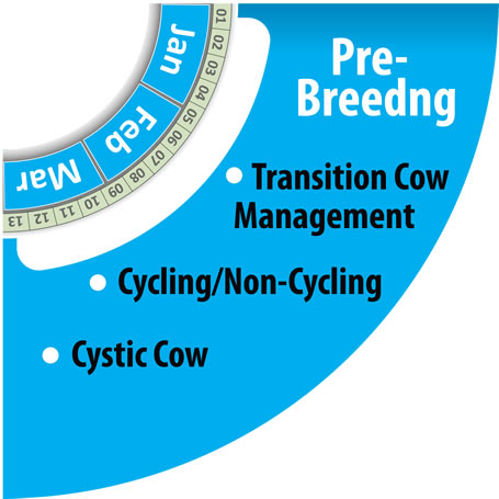 Monitoring Herd Pre-Breeding Period with HerdInsights