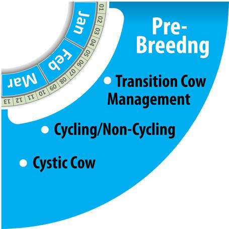Monitoring Herd Pre-Breeding Period with HerdInsights