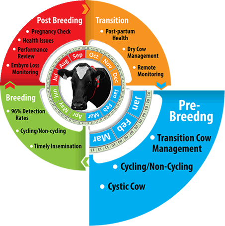 Herd Insights enables farmers to ensure their cows are ready for AI come breeding season