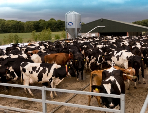 1,500 Cow Collar Deal in US helps drive Cork AgriTech company expansion